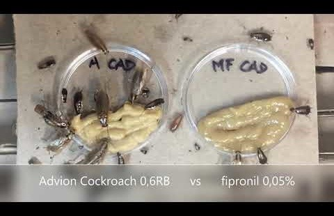 Advion Cockroach vs Fipronil 0,05%