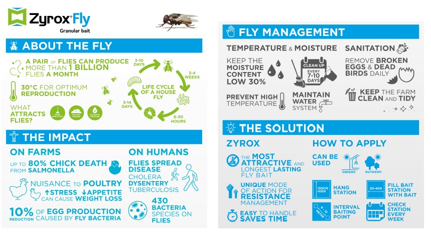 Zyrox Flies Problem Solution Infographic